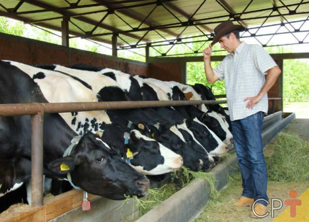 Vantagens do milho hidropônico para alimentação animal