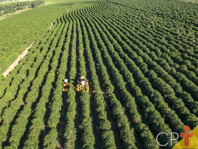 Vantagens da colheita mecanizada do café