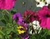 Jardins: flores que  encantam, flores que  tranquilizam
