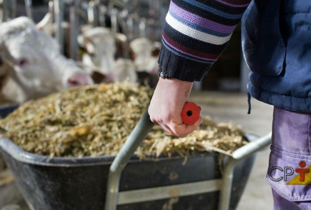 Alimentação animal de qualidade e em quantidade tem nome: SILAGEM   Artigos Cursos CPT