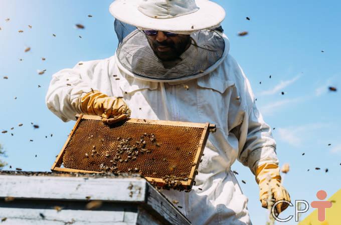 Como proteger a colmeia contra o ácaro varroa