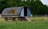 Gaiolas portáteis para a criação de galinha caipira? Isso é possível?