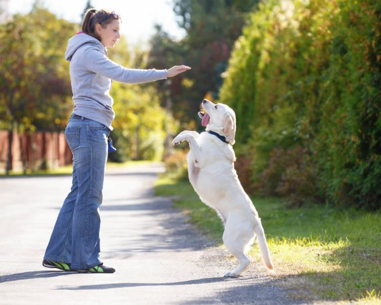 Dicas práticas para adestrar o seu cão
