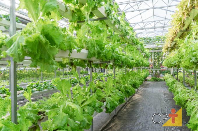 Como cultivar alface hidropônica