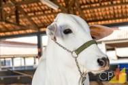 Causas de problemas podais em bovinos