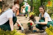 Invista em empresa de jardinagem e ganhe dinheiro