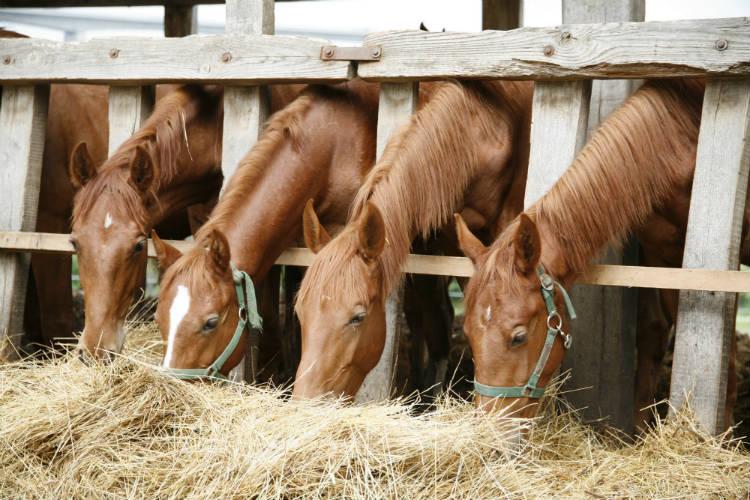 Orientações sobre alimentação de cavalos