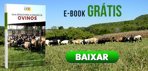 E-book Guia Básico para a Criação de Ovinos