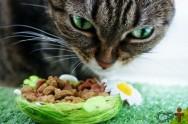 Nutrição de cães e gatos: saiba mais sobre o assunto