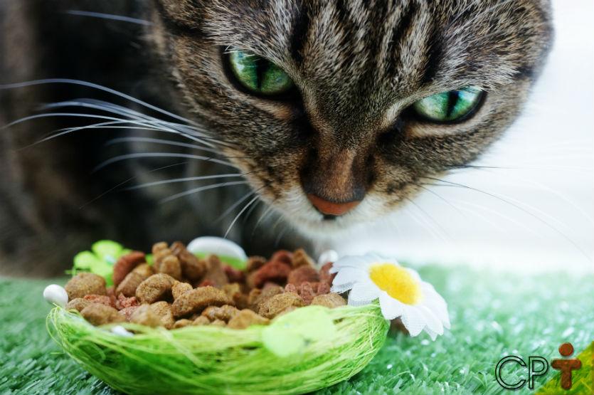 Nutrição de cães e gatos: saiba mais sobre o assunto    Artigos Cursos CPT