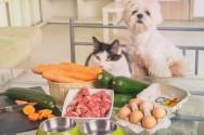 Vai preparar a comida do seu cão? Evite a contaminação cruzada!