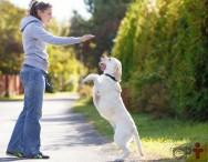 Dica: quanto maior o cão, menor quantidade de calorias diárias