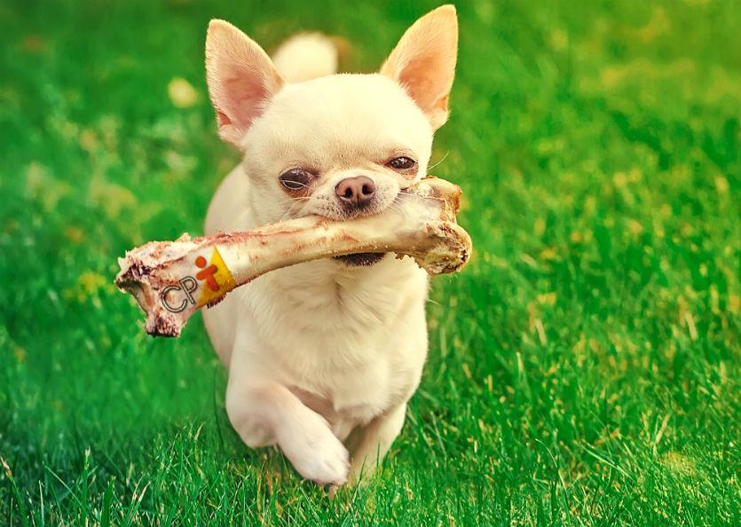 Alimentação natural de cães e gatos: o que evitar?   Artigos Cursos CPT