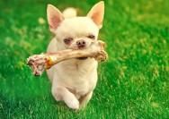 Alimentação natural de cães e gatos: o que evitar?