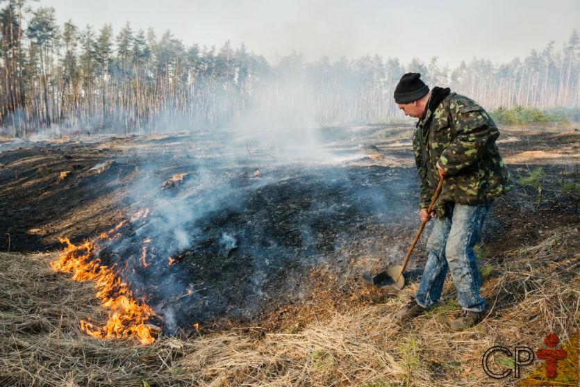 Clima, pragas e doenças e o fogo: qual o pior destruidor de vegetações?   Dicas Cursos CPT