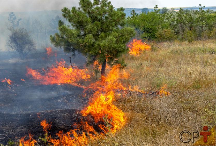Você sabe a diferença entre incêndio florestal e queima controlada?    Dicas Cursos CPT