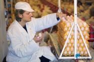 Sistemas de produção de ovos