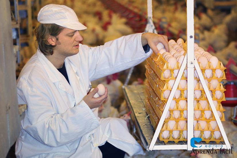 Produção de ovos
