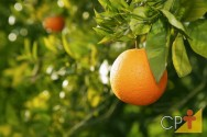 Confira as variedades de laranja e os benefícios da fruta para a saúde