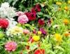 Tipos de flores transformam arranjos em espetáculos da beleza
