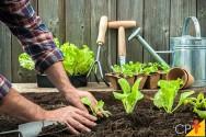 Quer cultivar vegetais em um espaço pequeno? Conheça algumas opções