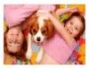 Raças de cães mais recomendadas para conviver com crianças