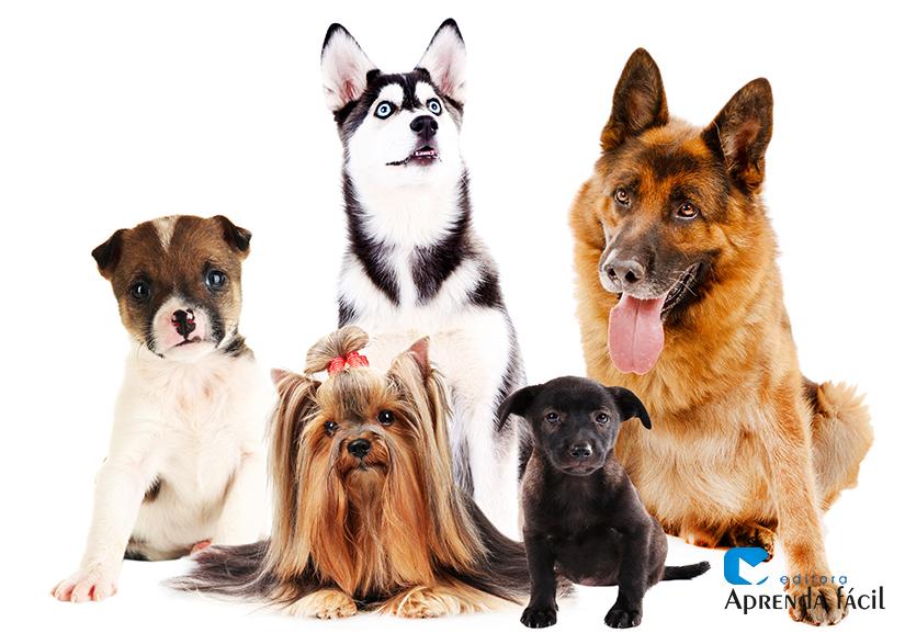 Diferentes raças de cães