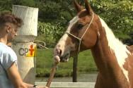 Estudando sobre contenção de equinos? Conheça o CACHIMBO!