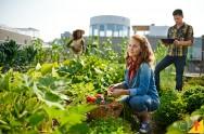 O consumo de alimentos orgânicos está aumentando, diz pesquisa