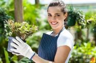 Flores para cultivar e comercializar