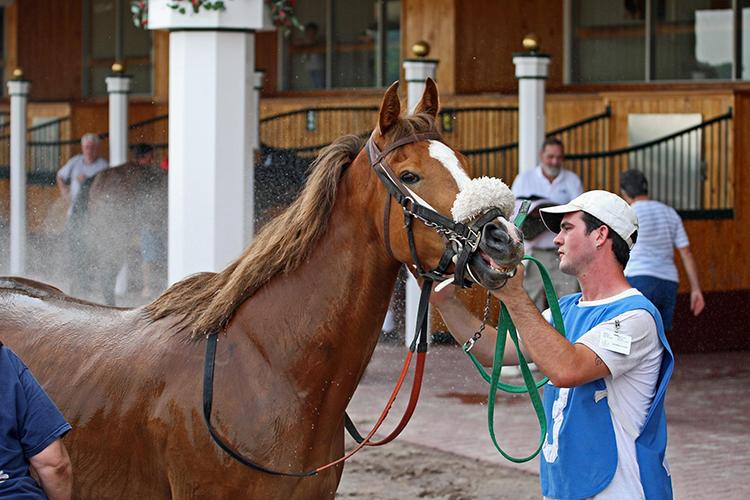 Cavalo sendo preparado - imagem ilustrativa