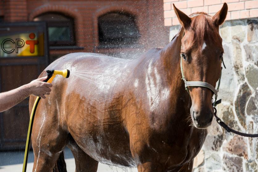 Antes de montar, prepare o cavalo corretamente para as atividades!    Artigos Cursos CPT