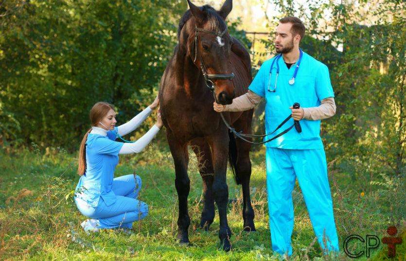 Motilidade Intestinal em equinos: saiba mais sobre isso   Artigos Cursos CPT