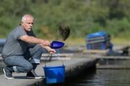 Arraçoamento de alevinos de tilápias: como fazer