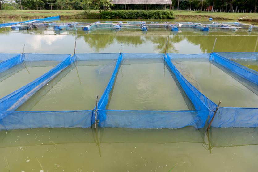 Além de tanques escavados, em quais estruturas recriar tilápias?   Artigos Cursos CPT