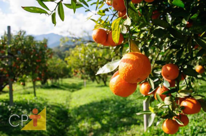 Torne-se um fruticultor bem-sucedido! Baixe nosso E-book Implantação de Pomar e Cultivo de Frutíferas