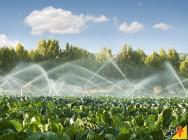 Você não pode perder o nosso novo E-book – Guia Básico para Irrigação!