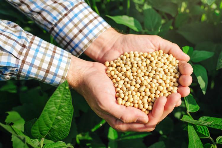 Confira as matérias-primas para biodiesel por região
