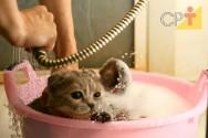 Breve tutorial para dar banho em gatos
