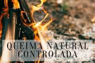 Queima Natural Controlada: mocinha ou vilã da natureza?