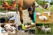 4 boas práticas para o bem-estar animal