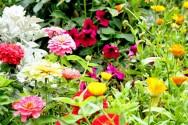 https://cptstatic.s3.amazonaws.com/imagens/enviadas/materias/materia2597/m-tipos-flores.jpg