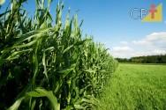 Fatores determinantes para o sucesso do milho irrigado