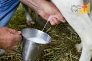 Mamite em cabras leiteiras: tipos, sintomas, diagnóstico, tratamento e prevenção