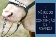Contenção de bovinos? Conheça os 5 métodos mais utilizados