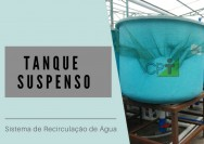 Sistema de Recirculação de Água (RAS): qual tanque usar?