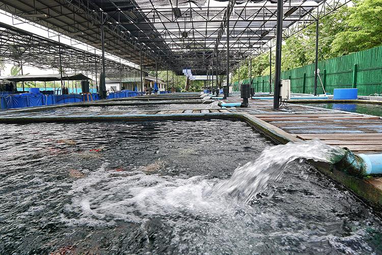 Água para a piscicultura