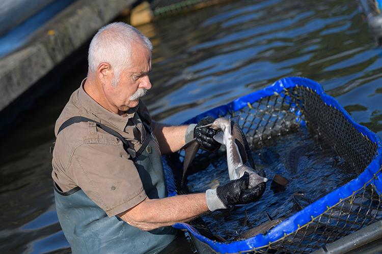 Manejo de peixes - imagem meramente ilustrativa