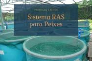 Sistema RAS para peixes: como garantir produção e renda?