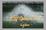 Como eliminar a amônia de tanques de peixes? Com a Biofiltração!